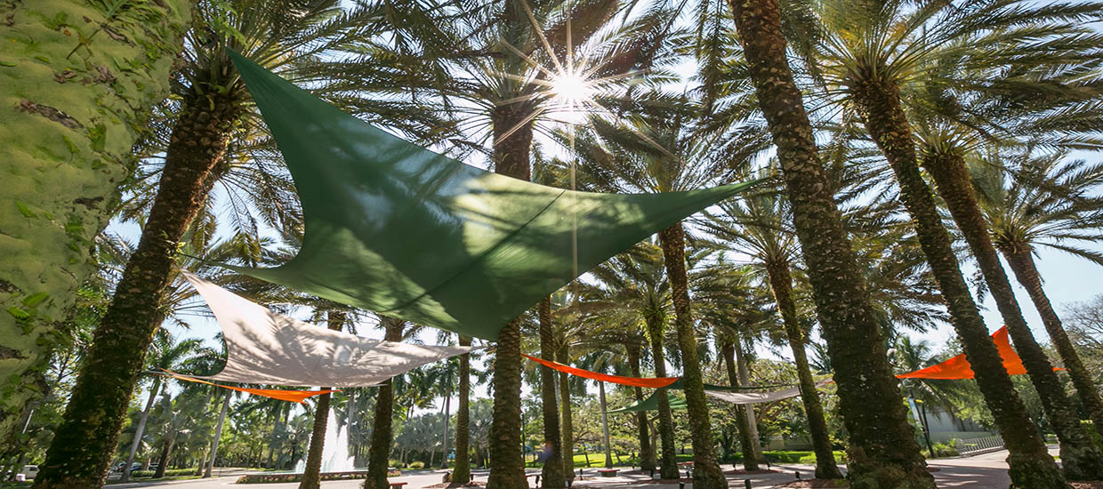Colorful hammocks suspended across several palm trees at the University of Miami Coral Gables campus.