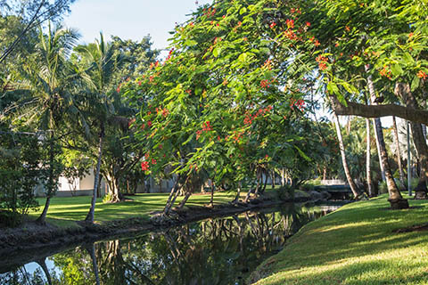 A view of campus landscaping and waterway at the University of Miami Coral Gables campus.