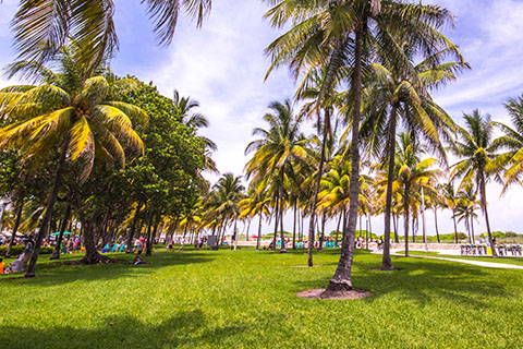 This is a stock photo. A photo from a park on Miami Beach, Florida.